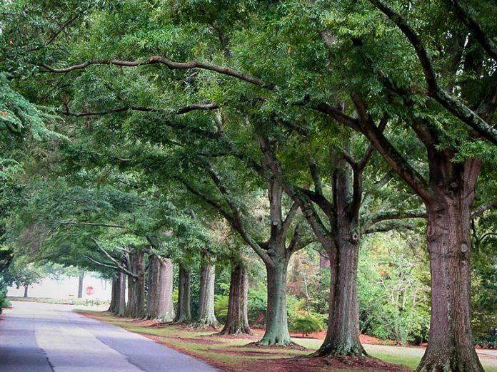 Charlotte street trees